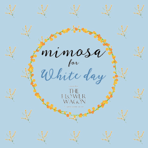 mimosa for White day